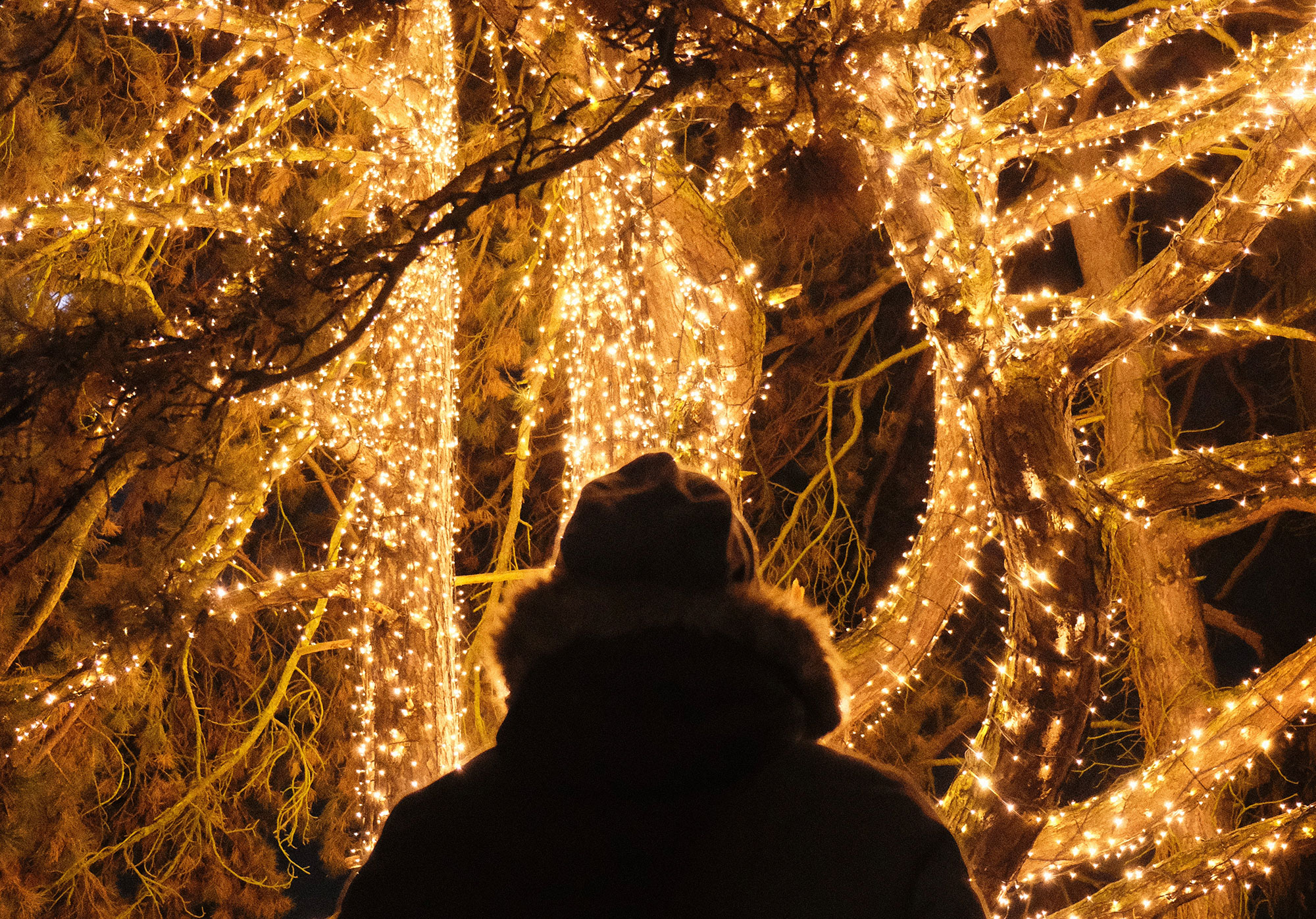 Trees with bright string lighting
